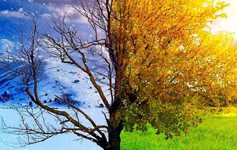 Students Compare Fall And Winter